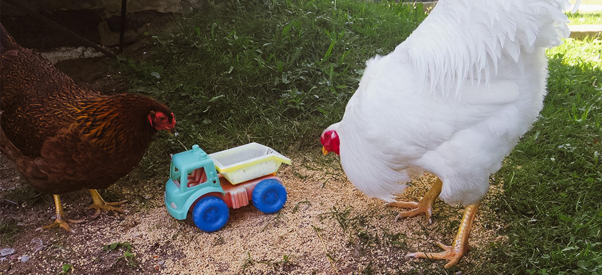 Grandir à la ferme