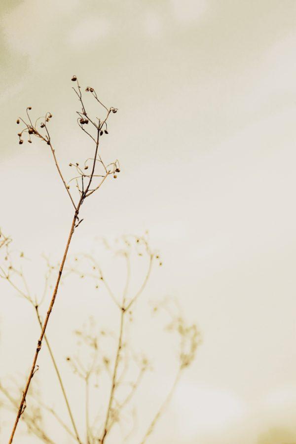 herbes, automne